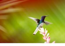 SAFARI PHOTO AU COSTA RICA - <p>le Costa Rica est une référence incontournable de la faune sauvage.</p> <p>Le pays qui offre le pourcentage le plus important de son territoire à la protection de la nature.</p> <p>Quoi de mieux que de partir en safari photo avec le photographe animalier spécialiste du Costa Rica ! Passionné, Maxime Aliaga saura vous faire partager son expérience du terrain.</p>