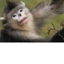 SAFARI PHOTO EN CHINE - <p>Un safari photo exceptionnel en Chine !</p> <p>Une exclusivité a ne pas manquer pour découvrir une faune riche, et parfois inconnue dans un pays qui s'ouvre et qui offre à Objectif Nature un voyage unique dans la province du Yunan.</p> <p>Soyez les tous premiers observateurs et photographes pour 15 jours en immersion pour un safari photo sans aucun doute inoubliable (mars 2018)</p> <p>http://www.objectif-nature.fr/destinations/chine/</p> <p>photo : Staffan Widstrand</p>