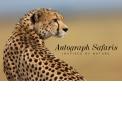 """Voyages et safaris photographiuqes - <p><em>Autograph Safaris, Inspirés par la Nature</em>offrent un large éventail d'expériences passionnantes à partir desquelles votre expérience sur mesure peut être construite.</p> <p>Que vous souhaitiez escalader le mont Kilimanjaro sur un sentier progressif, profiter de safaris privés dans les plus belles réserves d'Afrique, séjourner hors des sentiers battus dans des cabanes sur pilotis donnant sur une vallée fluviale, regarder des bébés tortues éclore et faire leur chemin vers la mer, perfectionner vos compétences photographiques ou vidéographiques """"sur le terrain"""", canoter le long du Zambèze ou examinerles icebergs d'un zodiac, admirer la beauté des Chutes Victoria, plonger dans les eaux cristallines de récifs privés, rencontrer et apprendre les coutumes de tribus éloignées,faire des photos saisissantesde la savane à partir d'un ballon à air chaud ou d'un avion privé, ou randonner pourvoir les gorilles des montagnes en voie de disparition ... les choix et les combinaisons sont infinis.</p>"""