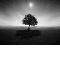 Photoshop - conversion et traitement noir et blanc - <p>Grâce à Photoshop CC, mais aussi Lightroom ou SilverFx, maitriser différentes techniques de conversion en noir et blanc, ainsi que les différentes techniques et outils, pour finaliser la retouche de sa photographie.</p>