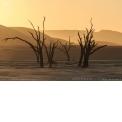 Voyage photo Namibie  avec un photographe pro - <p>Voyage photo complet, alliant tous les incontournables du pays et nos trouvailles photographiques. Des dunes ocres du désert du Namib aux étendues d'Etosha où prolifère la faune sauvage, des tourments de l'atlantique jusqu'au massif granitique du Spitzkoppe qui s'embrase au lever du soleil, le programme est une immersion profonde dans la grandeur de la nature australe. Un véritable condensé d'Afrique, complété par la découverte de la culture Himba, ces pasteurs semi-nomades aux coutumes ancestrales, que nous rencontrerons dans une séance dédiée à l'échange...et à la photographie. Pour que l'expérience soit totale, vous découvrez des établissements choisis minutieusement pour l'image : lodge, maison coloniale, tentes spacieuses et guesthouse de charme...</p>