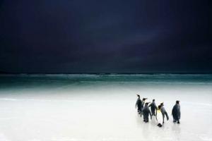 Groupe de pingouins sur la banquise sur fond de ciel bleu marine